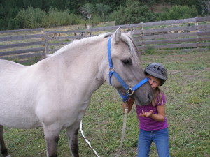 Silver Beauty -- Paradise Fjords Breeding Mare